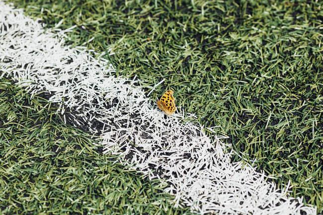 Vista de alto ângulo da borboleta no campo de futebol — Fotografia de Stock