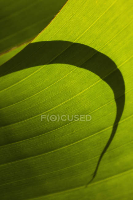 Close up view of shadow on green leaf — Stock Photo