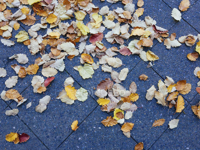 High angle view of fallen dry autumn leaves on footpath — Stock Photo
