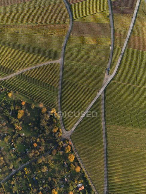 Vista aérea das culturas no campo agrícola durante o Outono — Fotografia de Stock