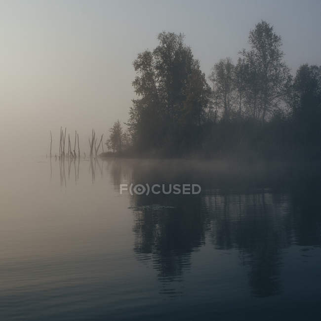 Scenic view of calm lake by trees during foggy weather — Photo de stock