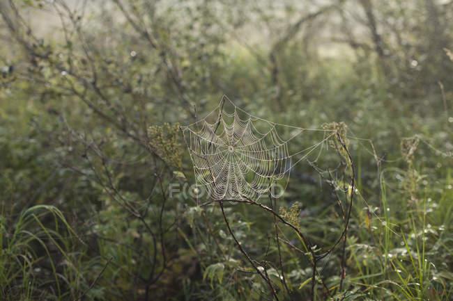 Plan rapproché de la toile d'araignée sur des usines — Photo de stock