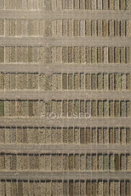 Full frame aerial view of crops in agricultural field — Stock Photo
