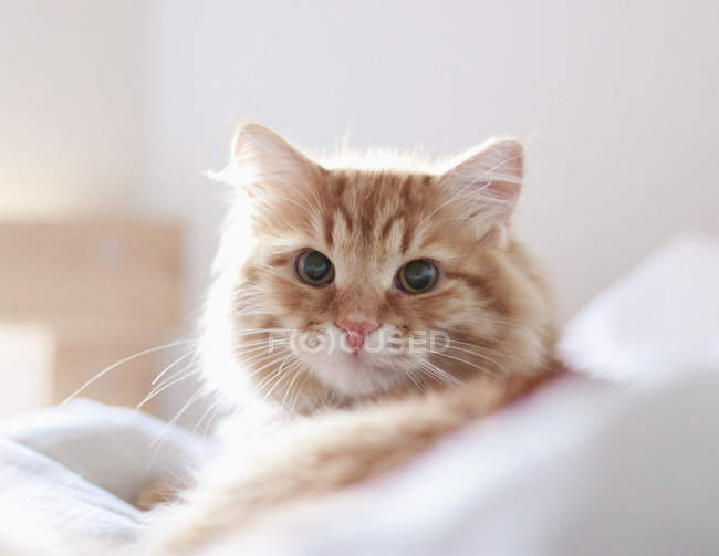 Close-up of cat relaxing at home — Stock Photo