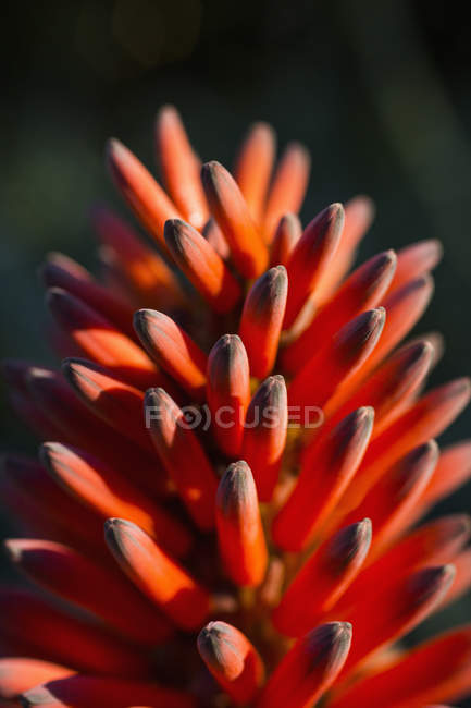 Close up view of orange wildflower petals — Stock Photo
