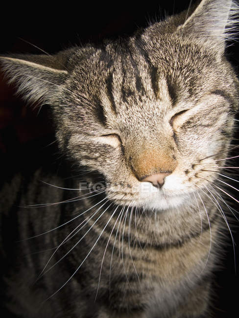 Portrait of cat with closed eyes — Stock Photo