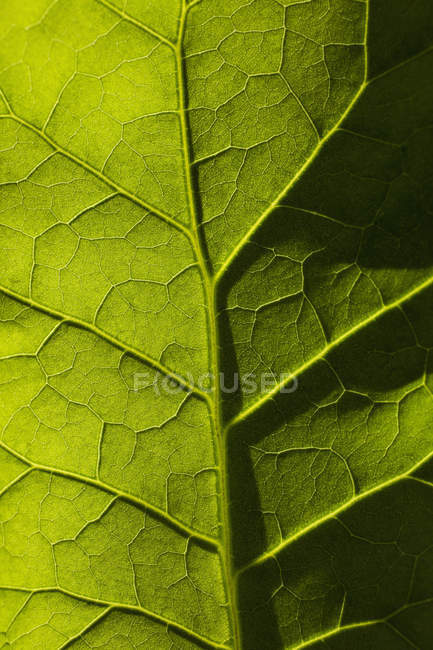 Full-Frame-Schuss von frischen grünen Blatt — Stockfoto