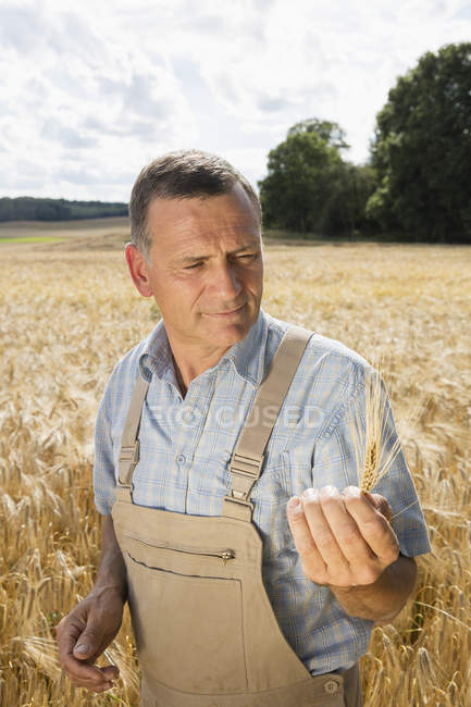 Mature man holding wheat ear while standing in farm — Stock Photo
