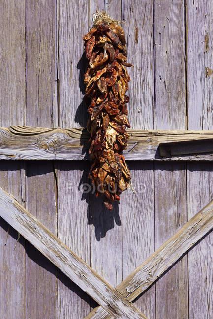 Mazzo di peperoncini appesi ad per asciugare su rete fissa rurale — Foto stock