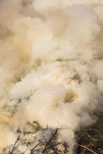 Deep smoke cloud emitting in forest — Stock Photo