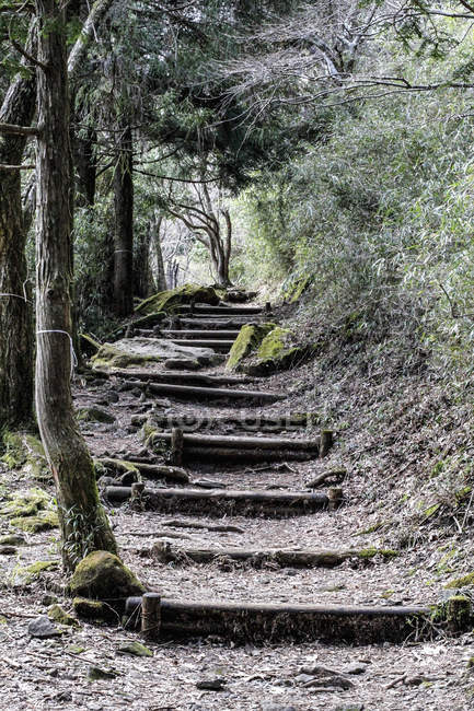 Low angle view of old steps amidst trees in forest — Stock Photo
