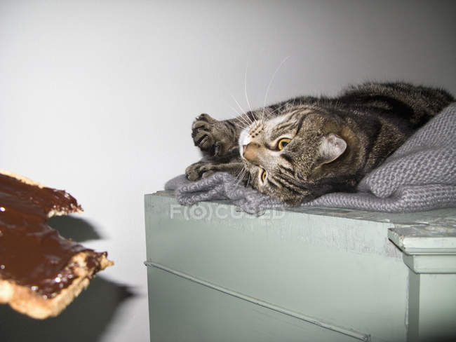 Кот лежит на диване и смотрит на кусок хлеба с шоколадным спрэдом — стоковое фото