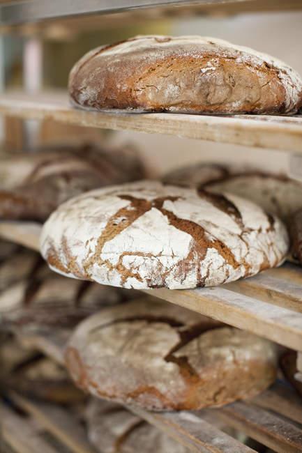 Racks of freshly baked bread — Stock Photo