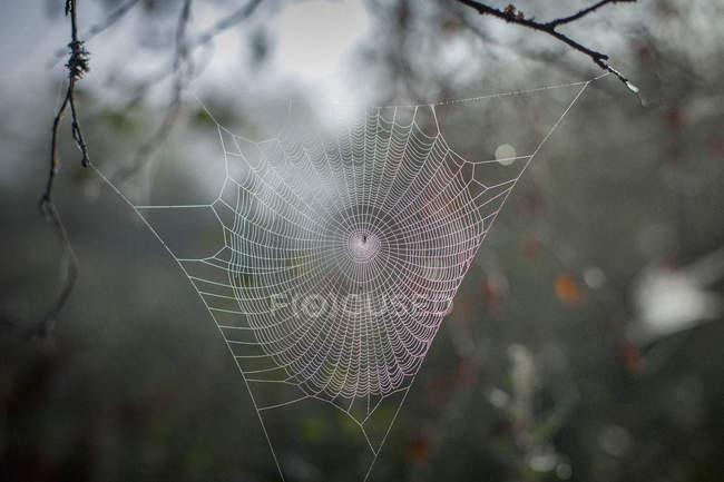 Close-up da teia de aranha na filial — Fotografia de Stock