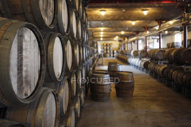 Interior da adega com fileiras de barris de carvalho — Fotografia de Stock