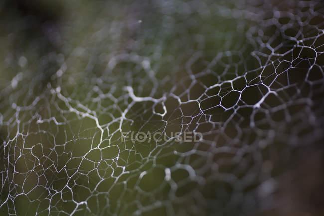 Macro shot de toile d'araignée dans la nature — Photo de stock