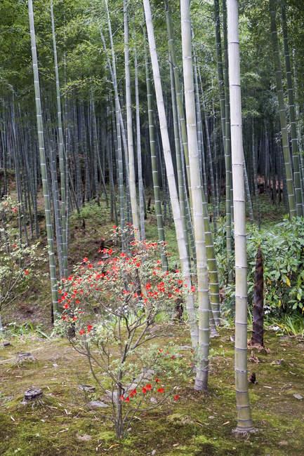 Fiori e piante di bambù al parco — Foto stock