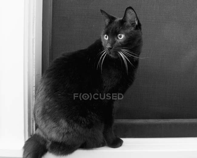 Black Cat Sitting On Window Sill And Looking Back Side View White Stock Photo 178122458