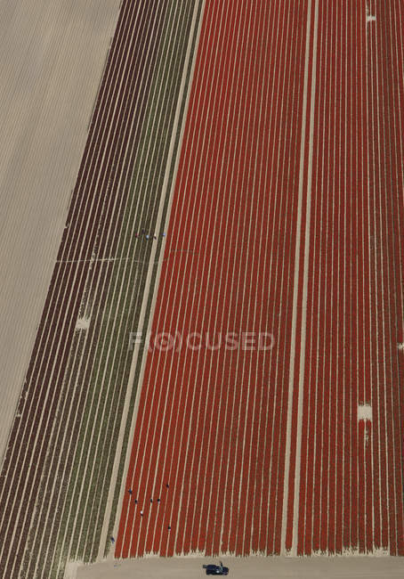 Distant view of crops pattern in agricultural field — Stock Photo