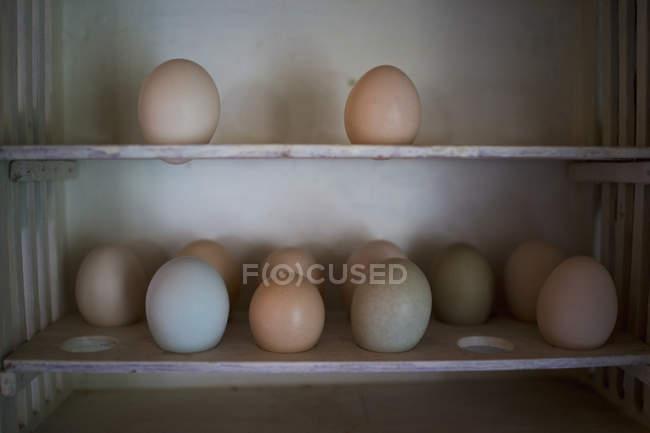 Vue rapprochée de divers œufs sur étagère — Photo de stock
