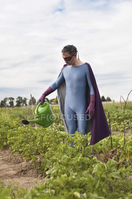 Mature man in superhero costume watering plants while standing at vegetable garden — Stock Photo