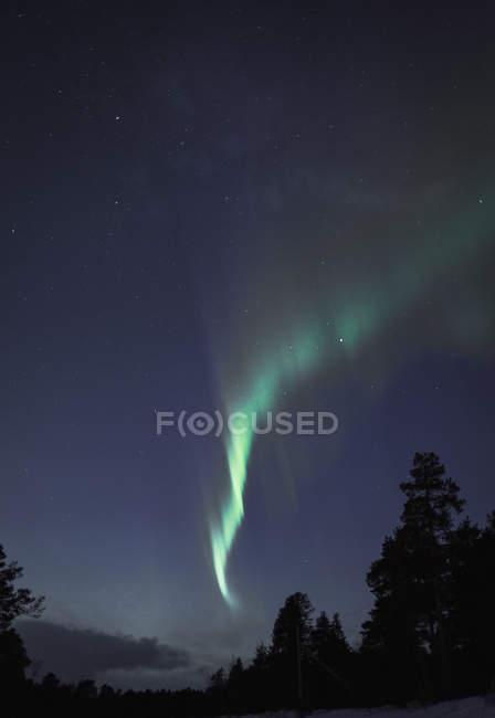 Низким углом зрения Северное сияние над силуэт деревьев ночью, Кируна, Швеция — стоковое фото