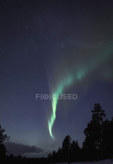 Low angle view of Aurora Borealis over silhouette trees at night, Kiruna, Sweden — Stock Photo