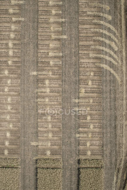 Full frame aerial view of wheat crops in agricultural fields — Stock Photo