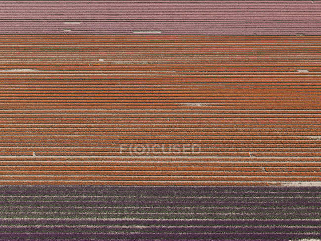 Full frame shot of crops pattern in agricultural field — Stock Photo