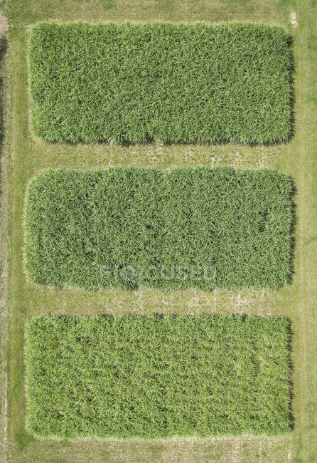 Full frame aerial view of green crops growing in farm field, — Stock Photo