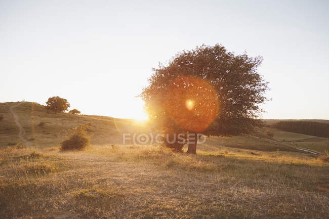 Trees on field against clear sky during sunset — Stock Photo