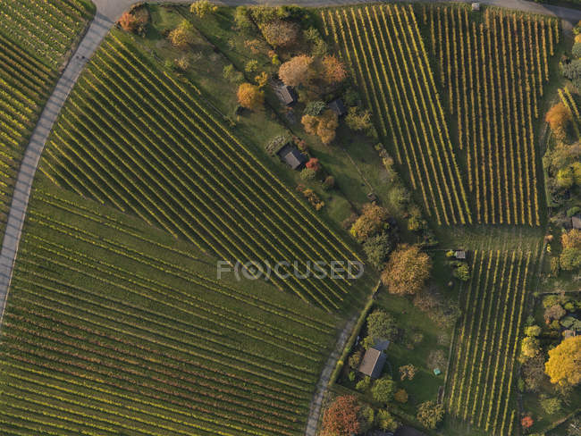 Quadro cheio de vinhas na paisagem durante o outono — Fotografia de Stock