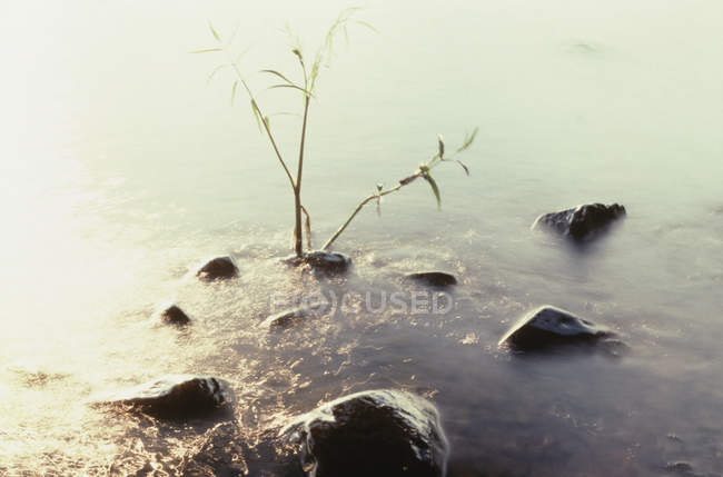 View to plant growing at hot spring — Stock Photo