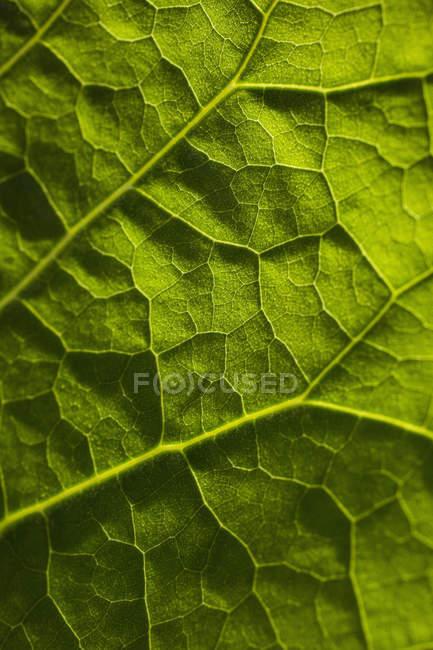 Полный кадр из свежего зеленого листа — стоковое фото
