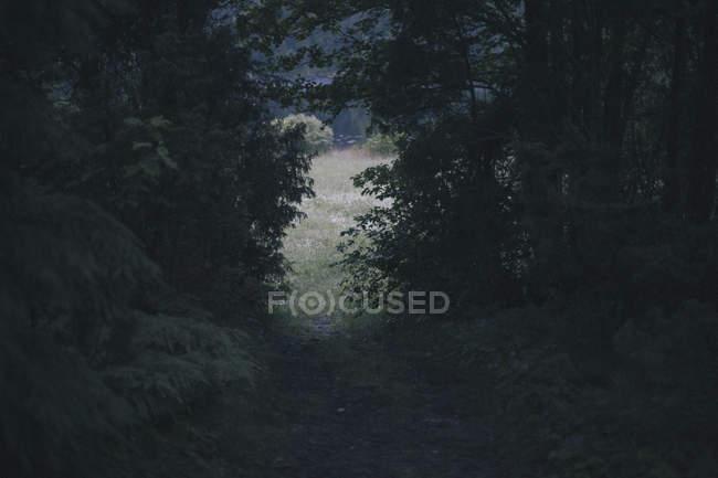 Schmaler Pfad inmitten üppigen Laubes im Wald — Stockfoto