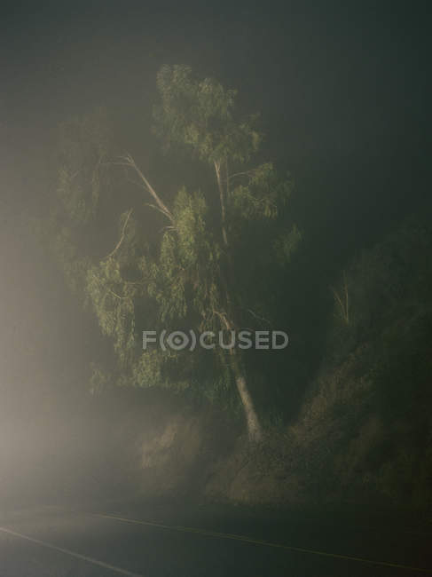 Tree by road side on foggy night — Stock Photo