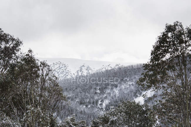 Schneebedeckte Bäume Landschaft gegen Himmel — Stockfoto