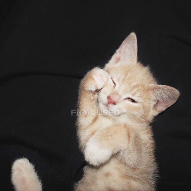 High angle view of kitten at night — Stock Photo