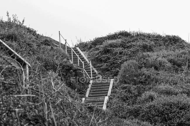 Low angle view of steps amidst bushes growing on hill against clear sky — Stock Photo