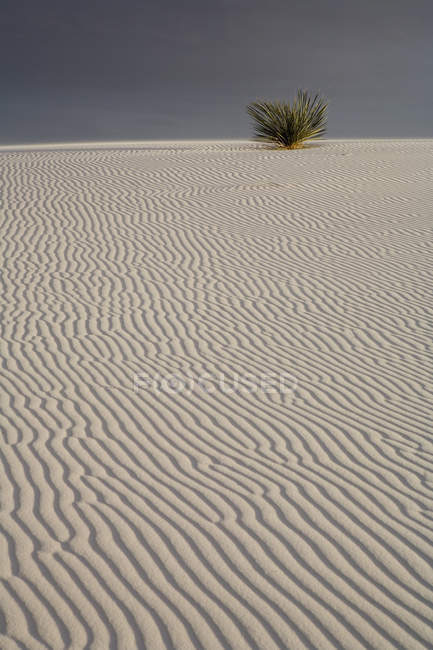 White rippled sands and plant against tough sky — Stock Photo