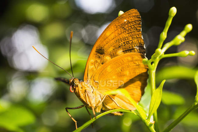 Close up view of yellow butterfly on plant — Stock Photo