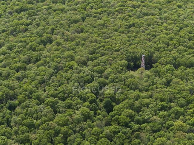 Vista aérea de antena en medio de árboles que crecen en bosque - foto de stock