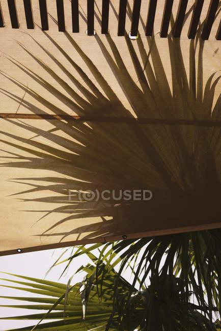 Закрыть вид на тент и пальмы против неба — стоковое фото