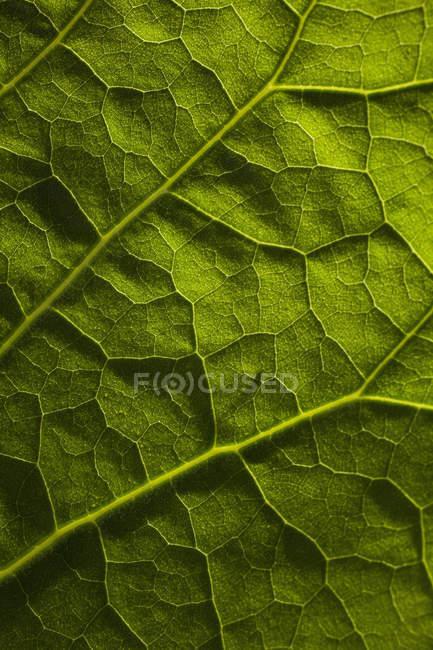 Full frame shot of green leaf — Stock Photo