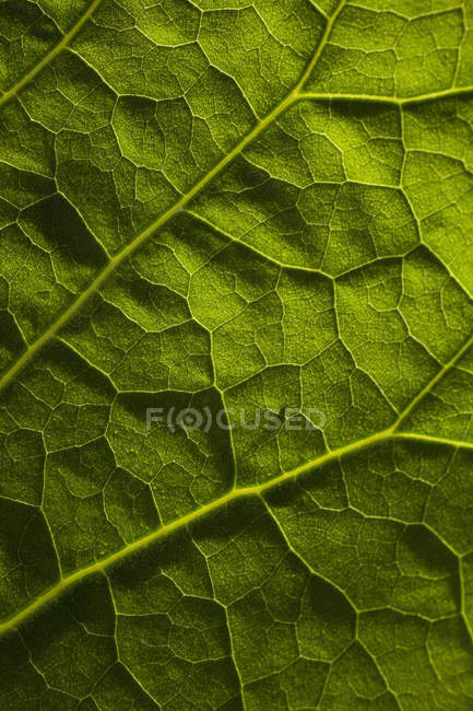 Plan plein cadre de feuille verte — Photo de stock