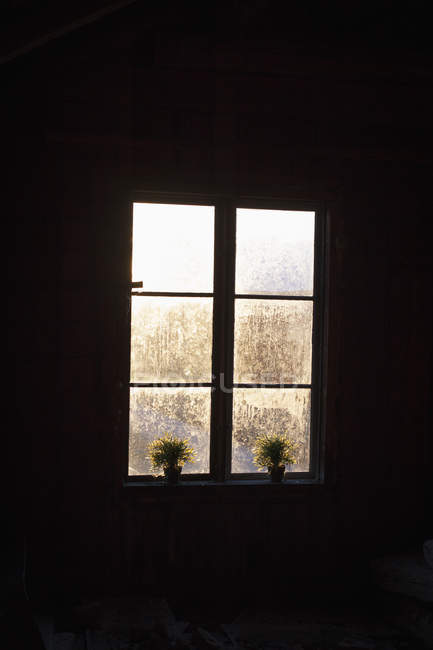 Potted plants on window sill in darkroom during winter — Stock Photo