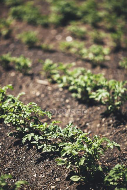 Pflanzen, die auf dem Feld wachsen — Stockfoto