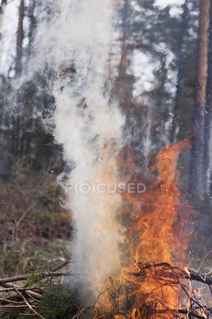 Smoke emitting from camp fire in forest — Stock Photo