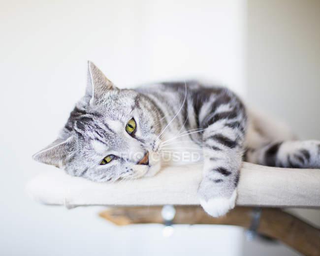 Ritratto di gatto sdraiato su mobili — Foto stock