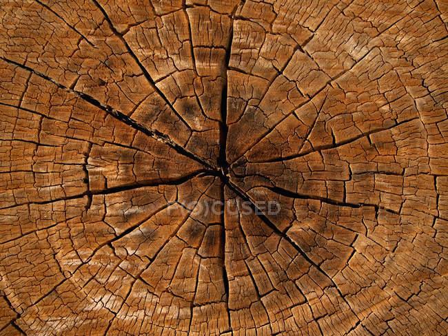 Повний кадр постріл дерева перерізу — стокове фото